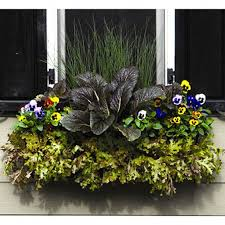 Window Boxes Planters by Window Box Planter With Coco Liner