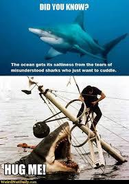 Shark Attack Meme - mythtaken shark attack deaths tyson adams