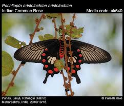 meaning of butterfly names the top post
