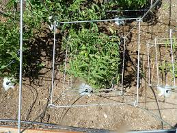 how to build tomato cages ideas