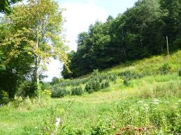 the sweet smell of a successful forestry project audubon north
