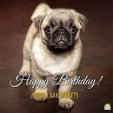 Happy Birthday Pug Meme - happy birthday meme hilarious funny happy bday images
