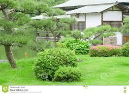 green pine tree backyard and traditional japanese house stock