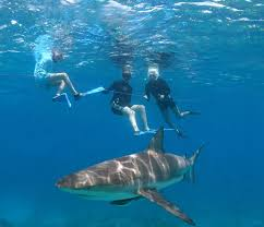 the future of shark conservation our kids u2013 deeperblue com