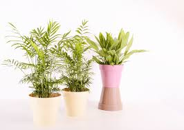 benefits of houseplants benefits of houseplants 10 reasons to have indoor plants soldrøm