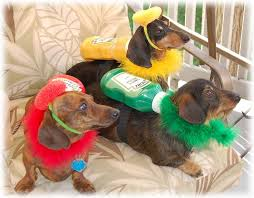 Halloween Costumes Wiener Dogs 20 Doxie Costumes Images Animals Dachshunds