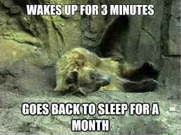 Funny Sleep Memes - 35 most funniest bear meme pictures and photos
