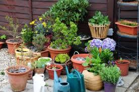patio gardening for beginners solidaria garden