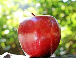 apple red apple red chief free photo on pixabay