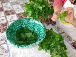 come cucinare l ortica ortiche in cucina come cucinare una pianta famigerata