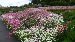 The Australian Botanic Garden Mt Annan Dayna S