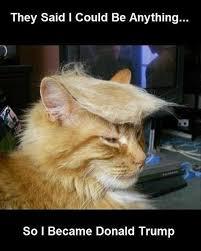 Donald Meme - top 15 donald trump funny memes