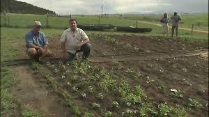 vegetable garden irrigation system youtube