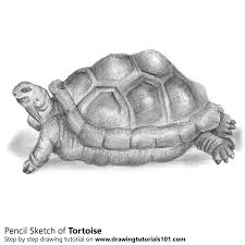 tortoise pencil drawing how to sketch tortoise using pencils