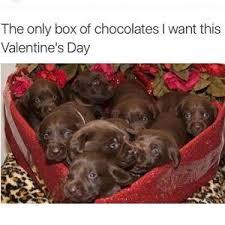 Chocolate Lab Meme - chocolate lab meme best chocolate 2017