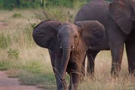 baby elephant hd images share online