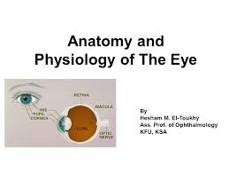 Eye Anatomy And Physiology Anatomy And Physiology Of The Eye Ppt Video Online Download