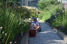 Botanical Gardens Volunteer by Interview With Jennifer Davit Director Of The Lurie Garden