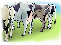3 ways to artificially inseminate cows and heifers wikihow