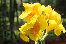 georgetown flowers flowers on waterloo georgetown guyana 7 lives