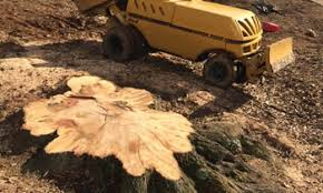 stump removal los angeles stump removal los angeles ca