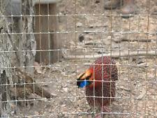 pheasant eggs poultry ebay