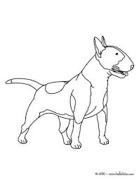 husky coloring pages hellokids