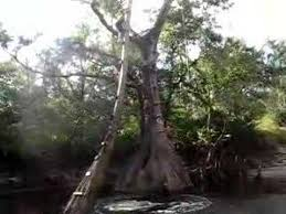 jumping a tree in orlando florida