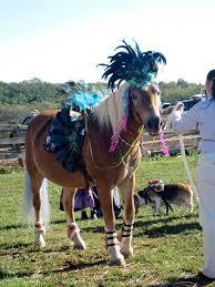 Halloween Costumes Horse 41 Arabian Horse Costumes Images Horse