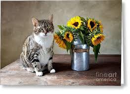 sunflower greeting cards fine art america
