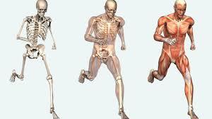 Human Body Anatomy Pics The Human Body The Human Body Anatomy Facts U0026 Functions Youtube