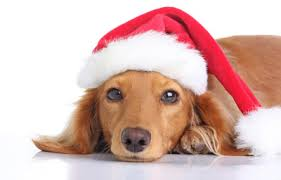 holiday dog tips dapper dog training