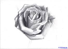 art galleries rose flowers art gallery drawing ideas for art