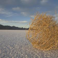 deserted capitol has tourists looking for tumbleweeds florida