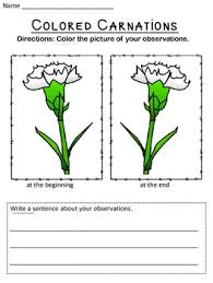 colored carnations coloring comprehension and places
