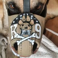 belgian malinois k9 attack 12 best dogs images on pinterest places article html and