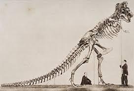 dinosaur skeleton art fine art america