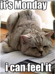 Funny Memes About Monday - 33 most funniest pet meme pictures and images