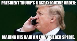 Funny Hilarious Memes - 13 donald trump funny hilarious memes funny pics pics story