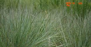 native minnesota plants septic mound mix minnesota native landscapes