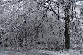 file trees with ice jpg wikipedia