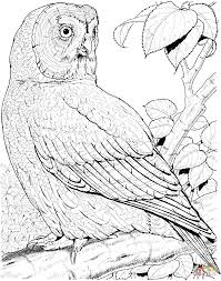 great grey owl coloring page free printable coloring pages