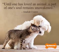 Love Is Unconditional Quote by Pets Bring Unconditional Love Quotes Pinterest Animal Cat