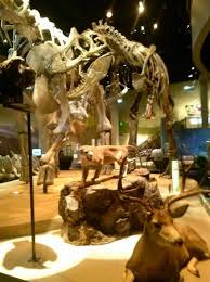 another take of the dinosaur floor picture of perot museum of