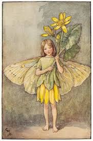 the celandine fairy flower fairies