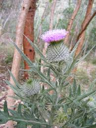 plants native to uk flora of scotland wikiwand