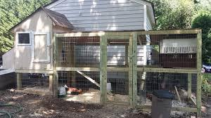 new to the backyard chicken world backyard chickens