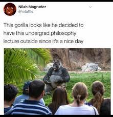 Gorilla Memes - best of philosophy gorilla memes 21 photos thechive