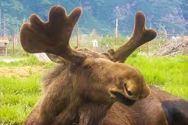 Alaska wildlife images Bbyo passport trek alaska aspx