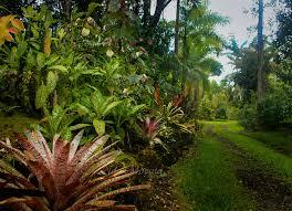 Tropical Plants For Garden - exotic garden entryway in hawaii noel morata photography